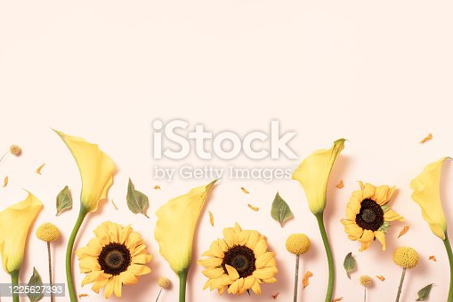 Flower summer composition with sunflower on pastel yellow background, flat lay top view
