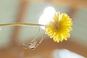 istock Flower swing 823369632