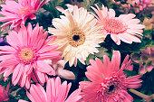 istock flower wedding decoration, beautiful gerbera flower blooming 508541146