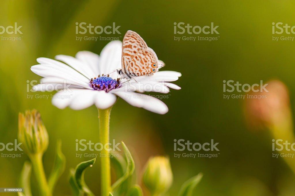 Flor com uma borboleta no centro - foto de acervo