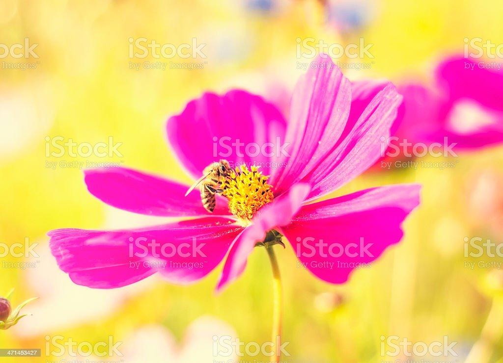 Blume mit Biene Lizenzfreies stock-foto