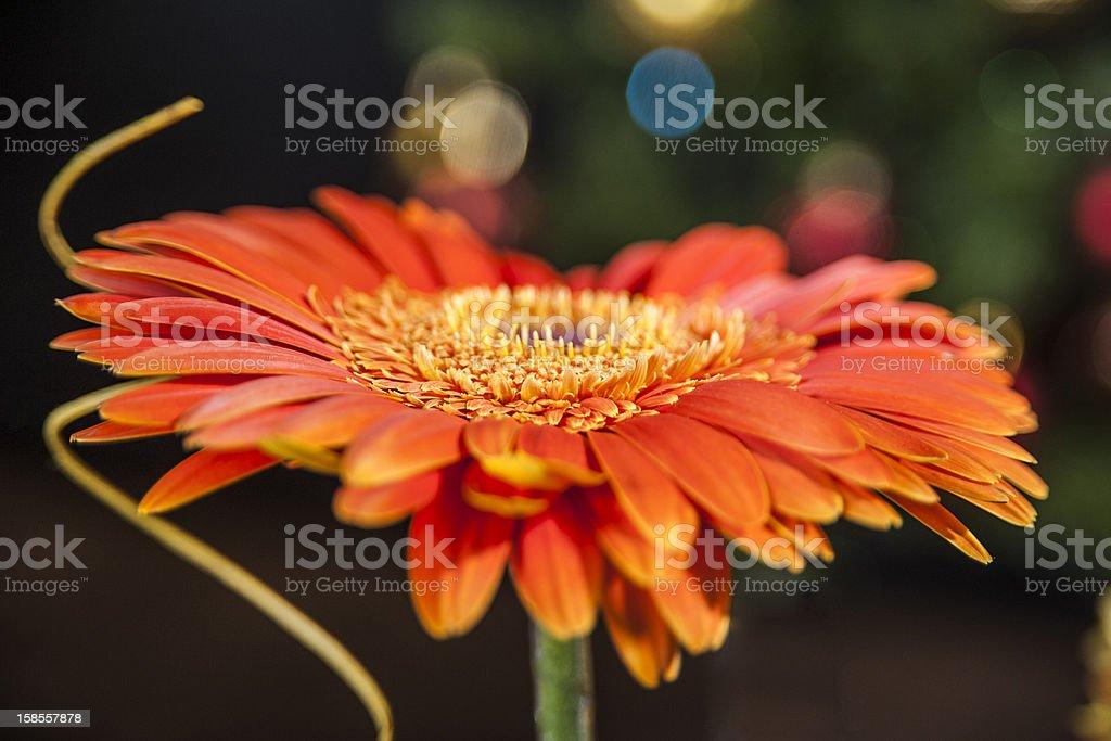 꽃, 브로컨 단궤 royalty-free 스톡 사진