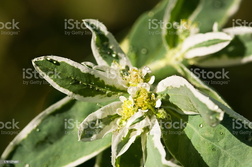 Flower with drops on it royalty-free stock photo