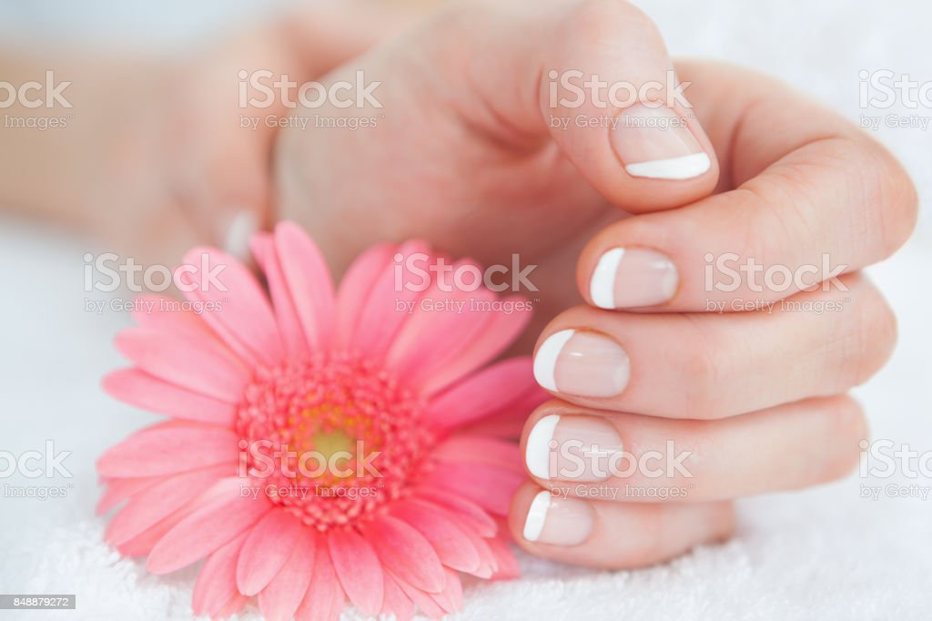 Flower with french manicured fingers stock photo