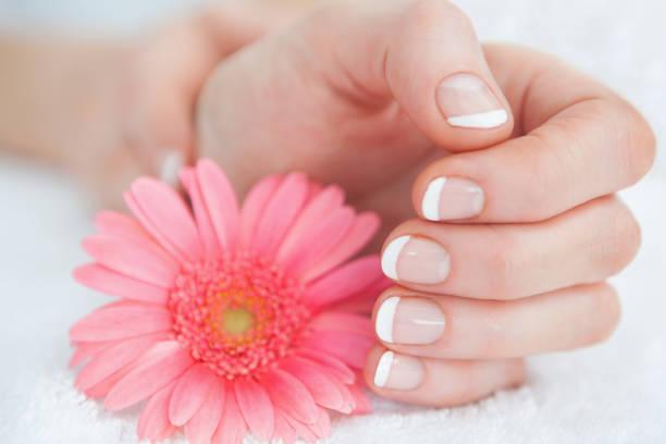 blume mit französisch manikürte fingern - nailstudio stock-fotos und bilder