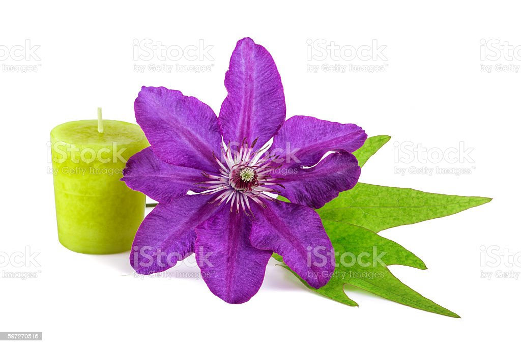 Flower with Green Candle photo libre de droits