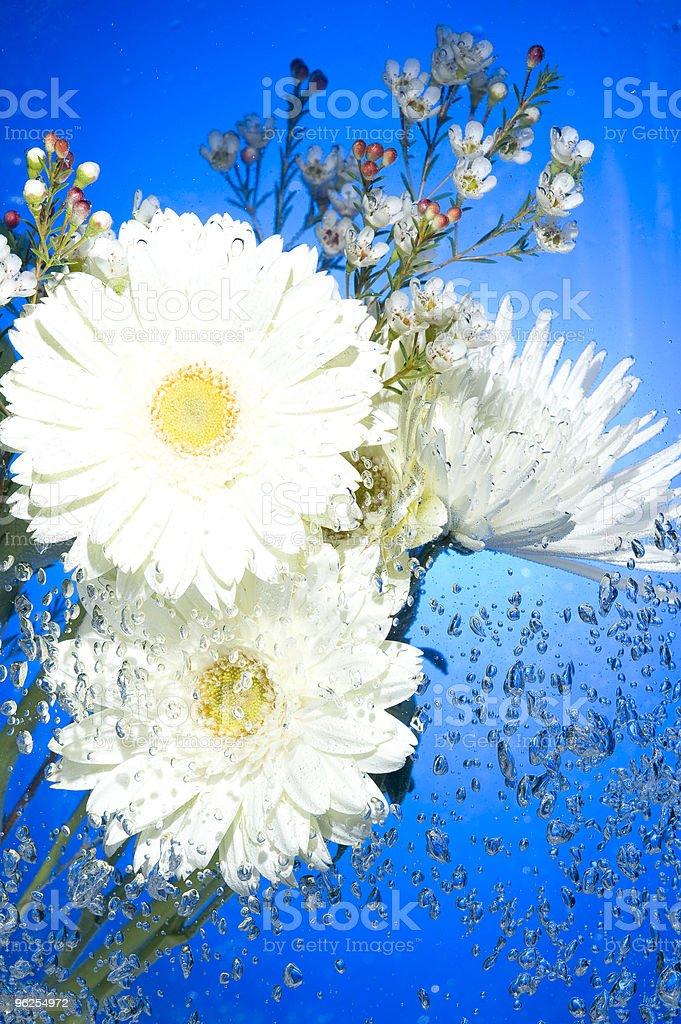 Flor com bolhas de água - Foto de stock de Azul royalty-free