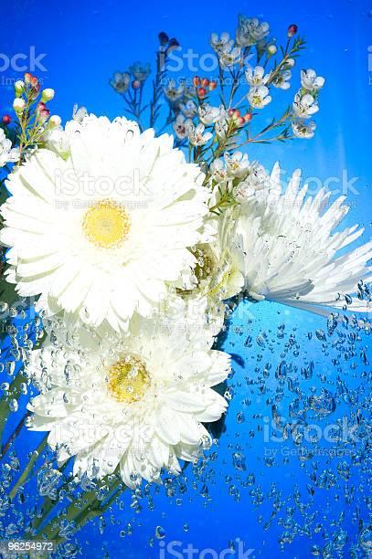Foto de Flor Com Bolhas De Água e mais fotos de stock de Azul