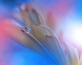 Flower with Waterdrop on Blue Colorful Background...