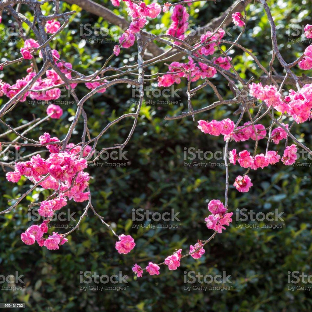 A flower wreath - Zbiór zdjęć royalty-free (Bez ludzi)