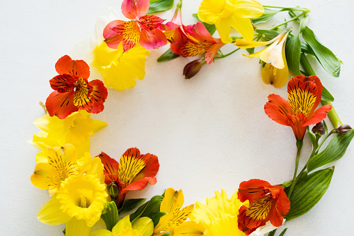 Flower Wreath White Background Floral Blossom Stock Photo - Download Image Now