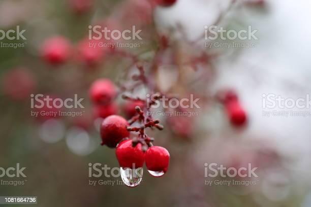 Flower15 picture id1081664736?b=1&k=6&m=1081664736&s=612x612&h=1o2r8jwnywhrgei6tf1fnv04pfknq2uz2z9vja11l5e=