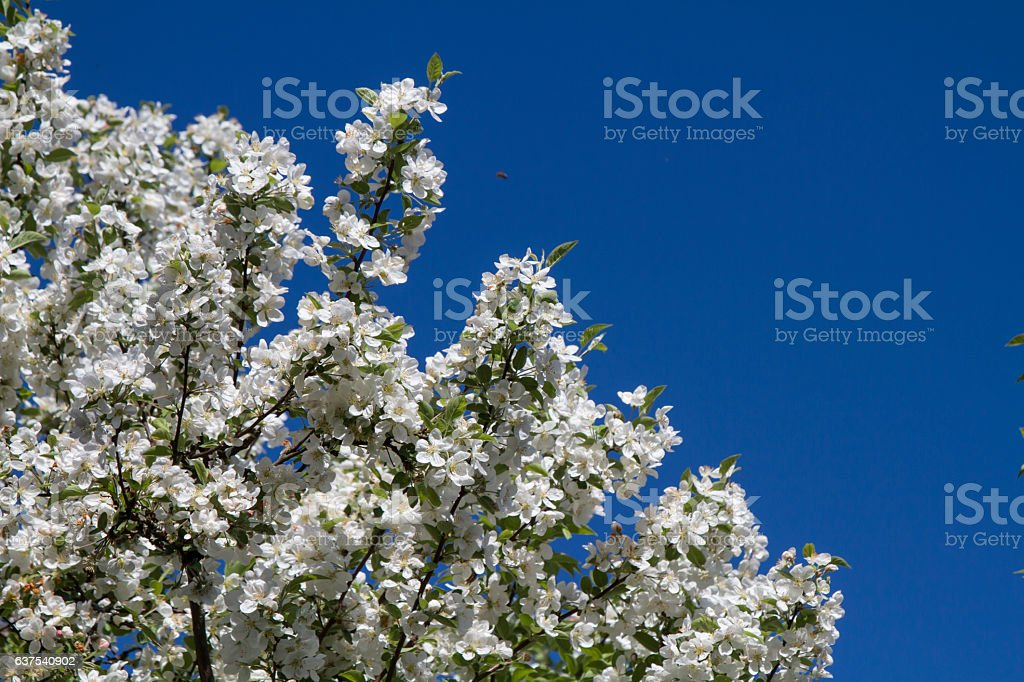 Flowerage stock photo