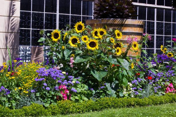 Flowerbed different flowers in garden picture id947241124?b=1&k=6&m=947241124&s=612x612&w=0&h=yufupl4zgrpecxazbdwr2ahvzcigbpd3cteeeg8lfdm=