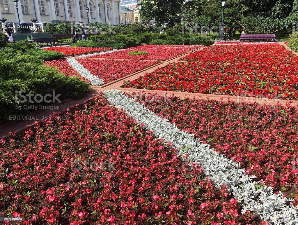 Flowerbed in Alexander gardens. Lizenzfreies stock-foto