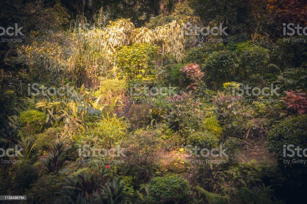 Bloembed in weelderige tuin met landschapsontwerp in koninklijke botanische tuin Peradeniya in Sri Lanka dichtbij Kandy omgeving foto