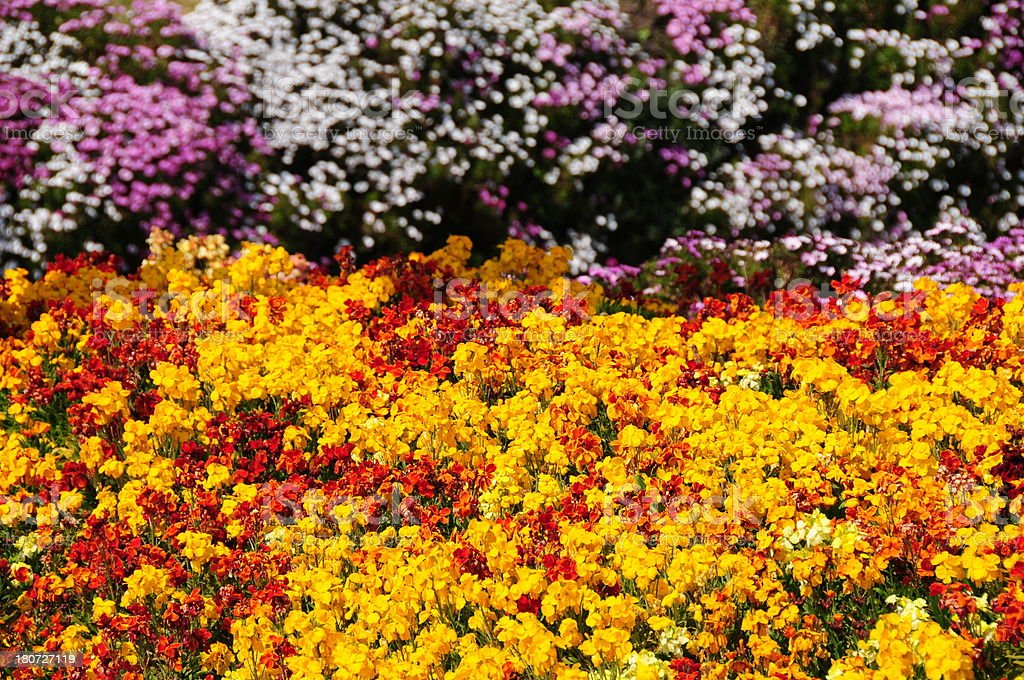 Flowerbed, Jersey. royalty-free stock photo