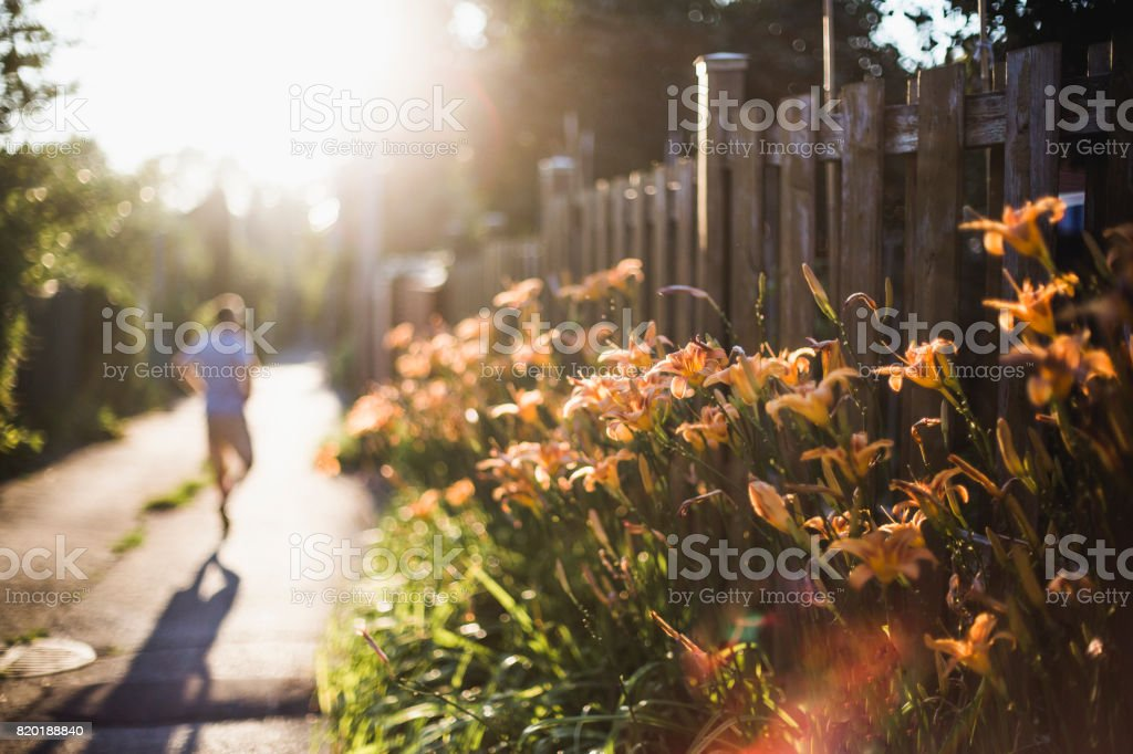 Flowerbed of orange day lilies in an alley at sunset stock photo