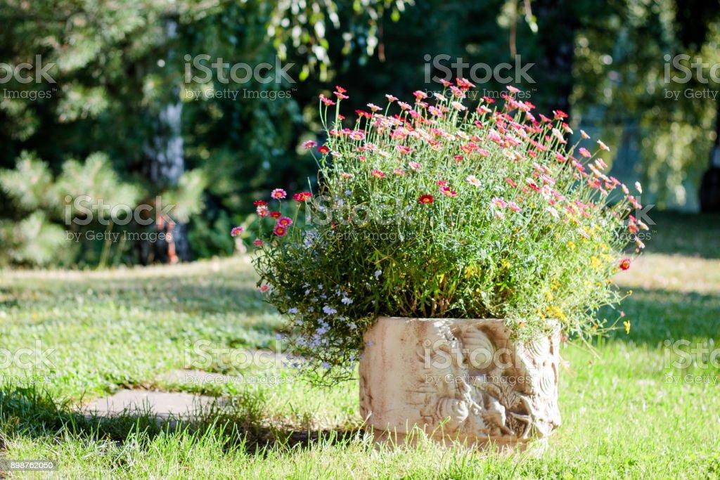 Flowerbed on flower garden as landscape design element stock photo