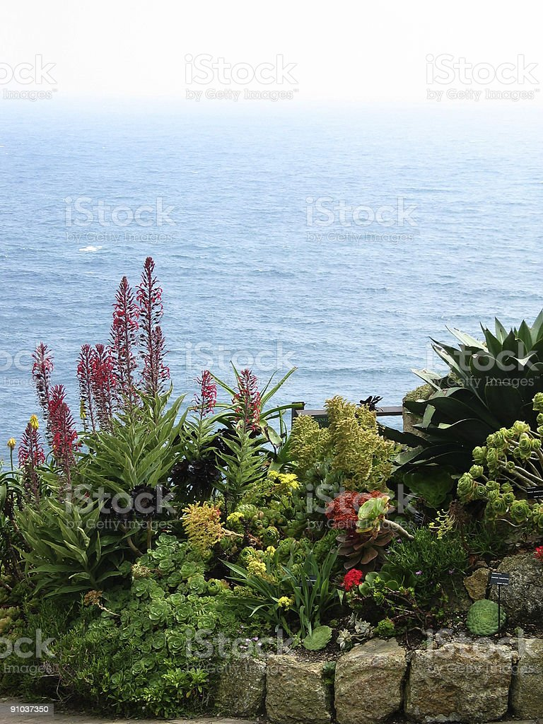Flowerbed with succulents in Cornwall England royalty-free stock photo
