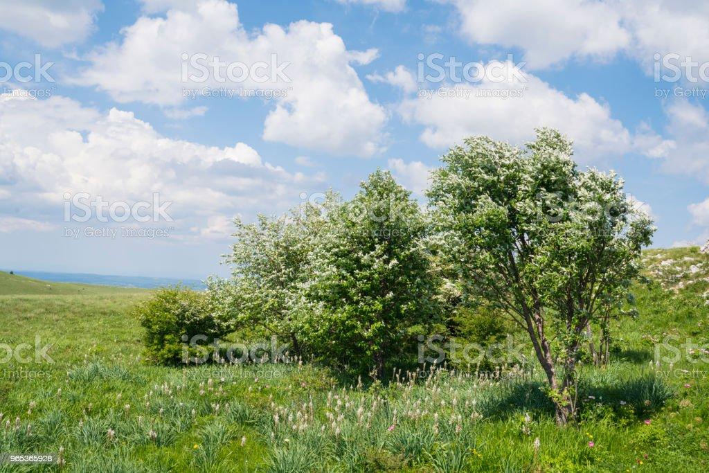 Parterre de fleurs d'arbres et le ciel bleu avec des nuages blancs dans le fond, Golic en Istrie, Slovénie - Photo de Arbre libre de droits