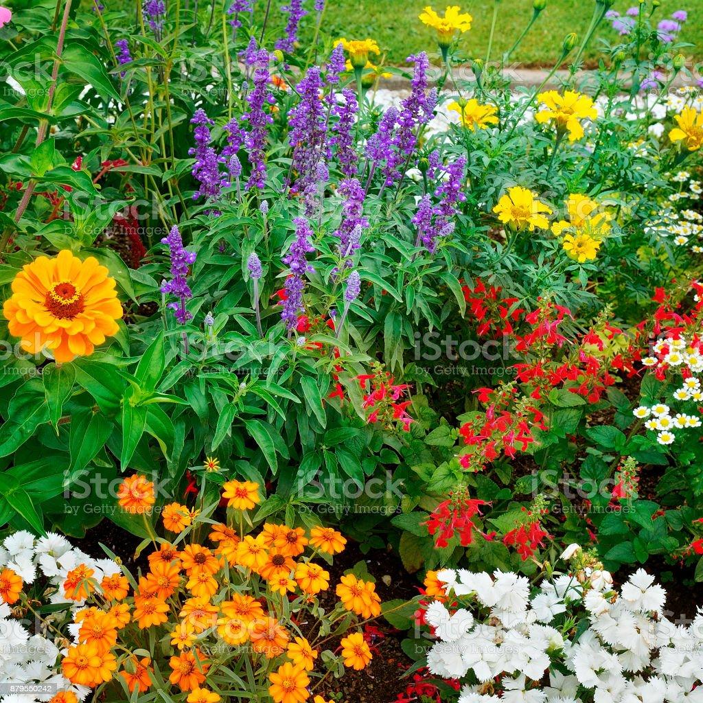 Image De Parterre De Fleurs photo libre de droit de parterres de fleurs beau fond de
