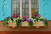 Flowerbox and window blue