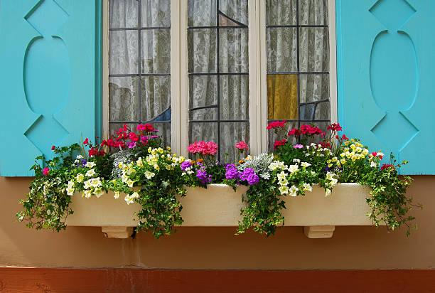 Flowerbox and window blue stock photo
