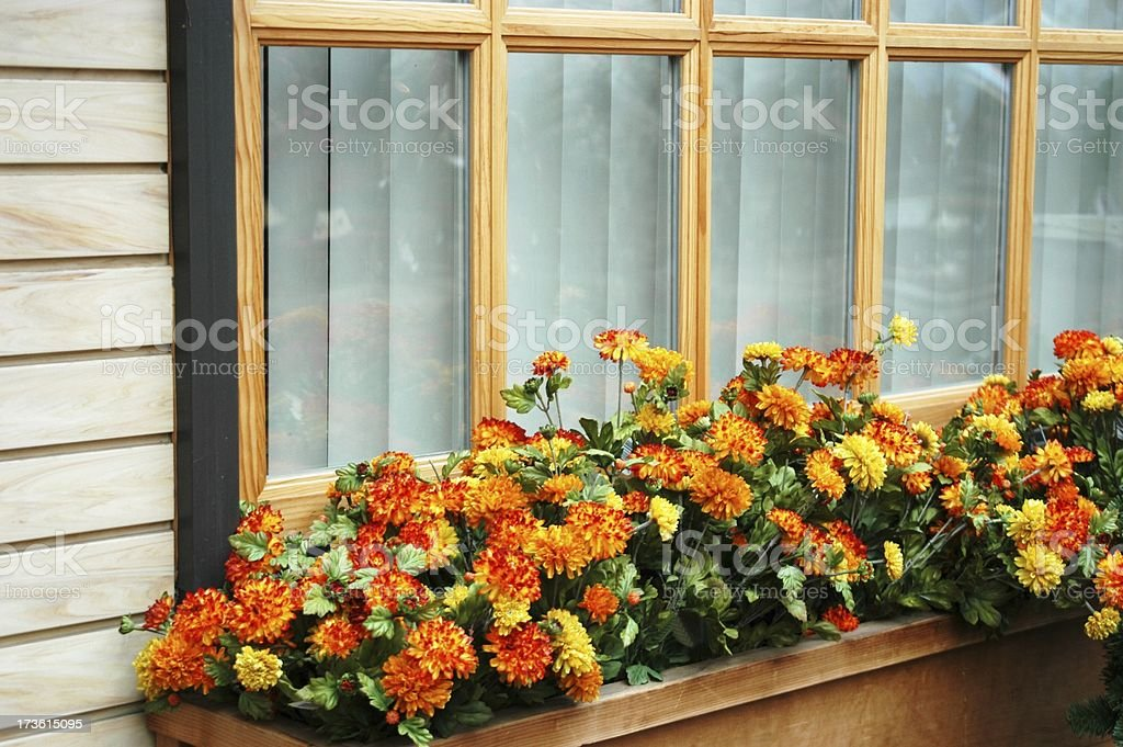 Flowerbox with Fall  Colored Flowers royalty-free stock photo