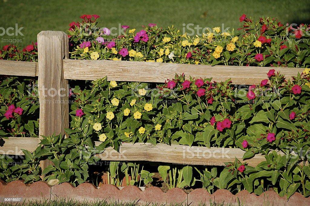 Flower-Draped Fence stock photo