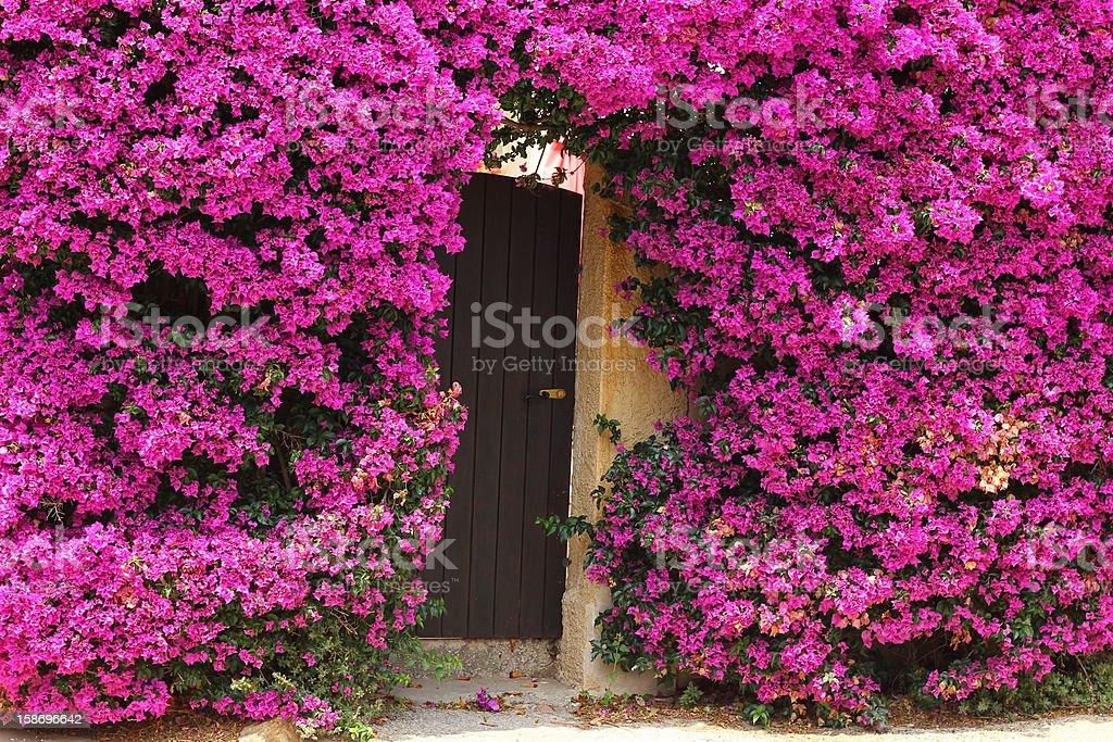 Flowered door in Porquerolles island stock photo