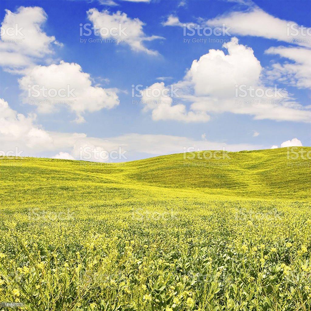 Flowered Landscape royalty-free stock photo
