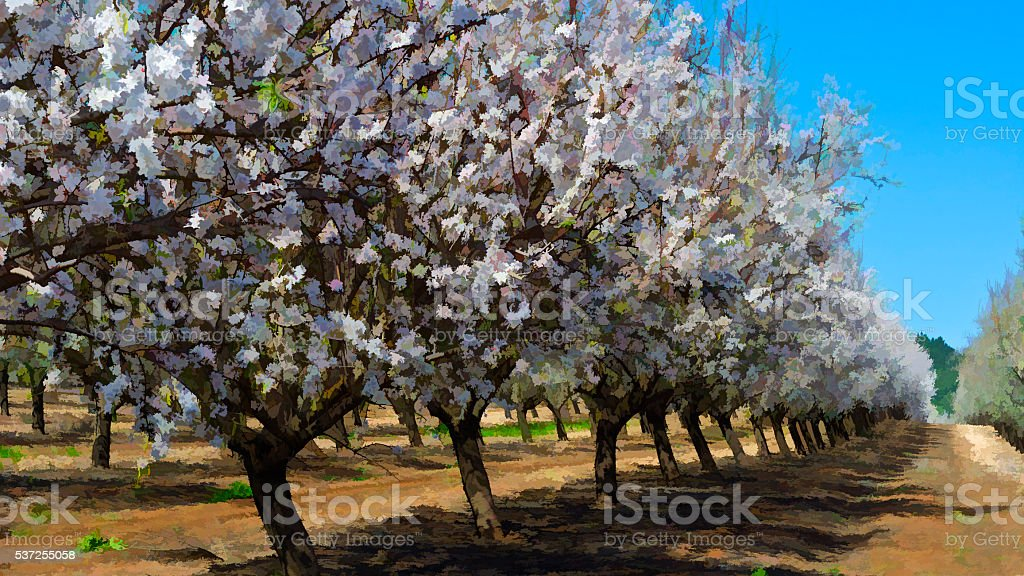 Flowering Almond Garden stock photo