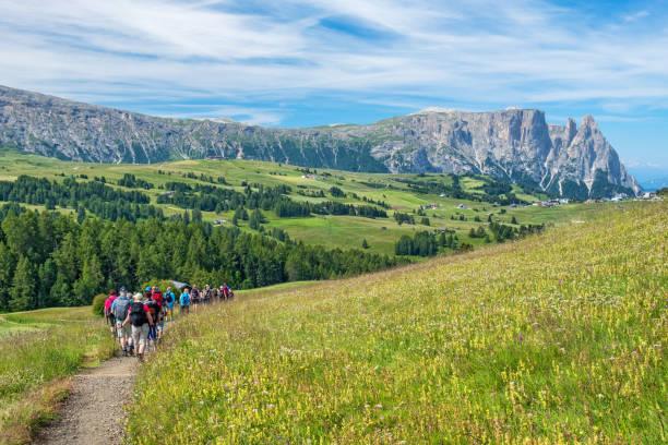 blühende almwiese mit bergen im hintergrund und wanderern auf einem weg - seiser alm stock-fotos und bilder