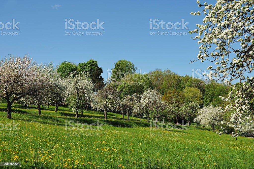 blühende Apfelbäume im Frühling – Foto