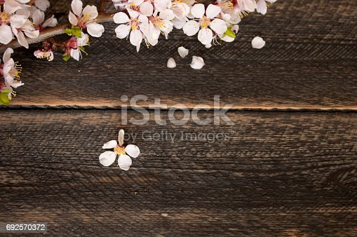 istock Flowering branch on the old wooden background. Spring Blossom. Top view 692570372