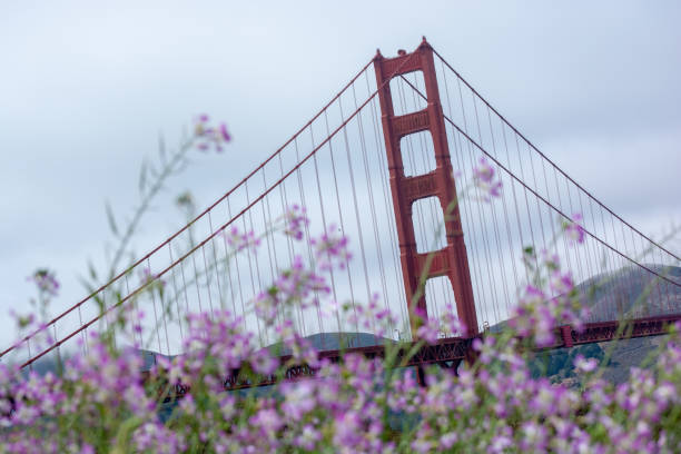 Flowering Bridge stock photo