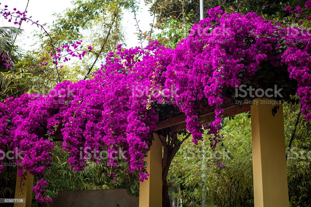 flowering bush stock photo