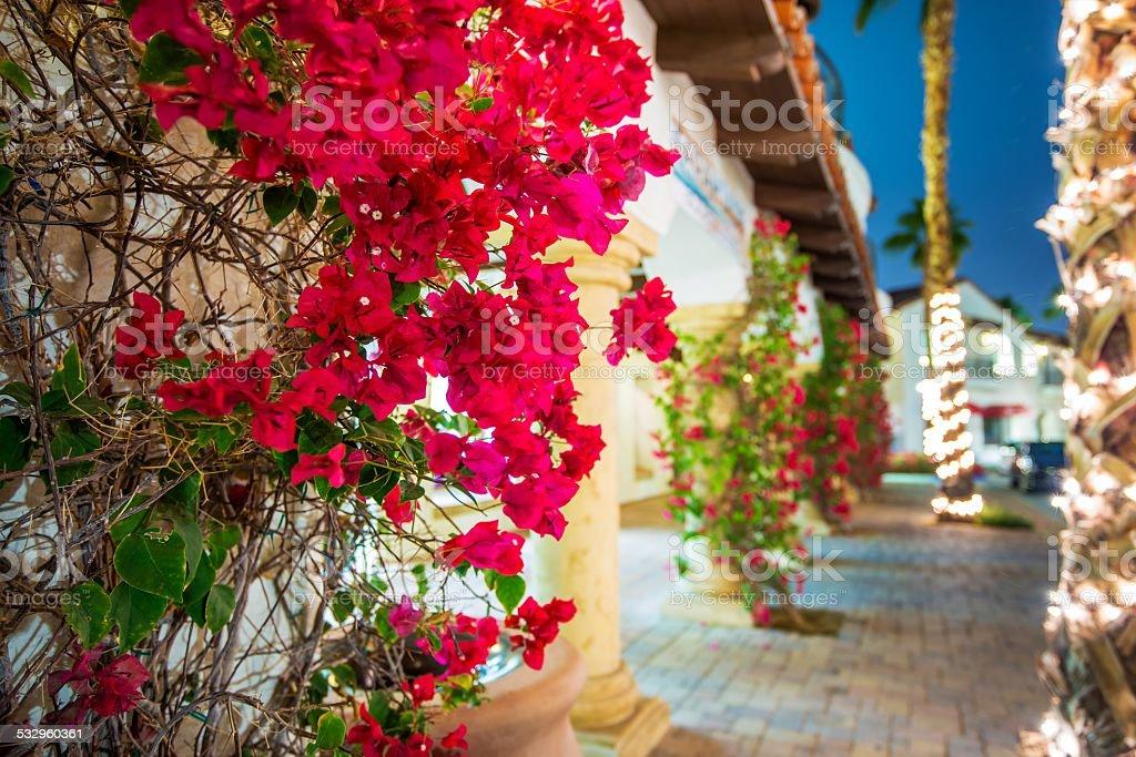 Flowering California stock photo