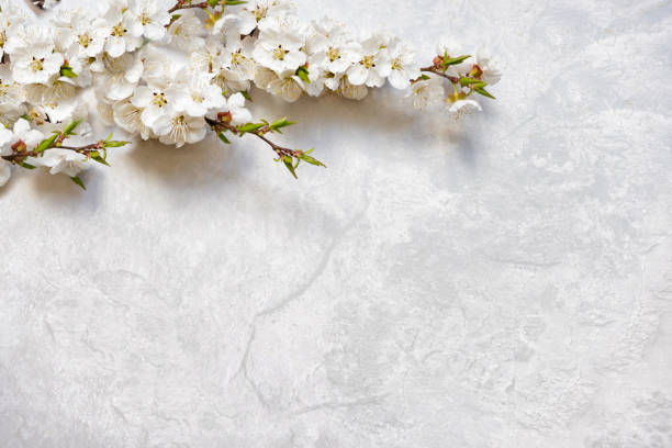 Flowering cherry branches on a marble surface stock photo