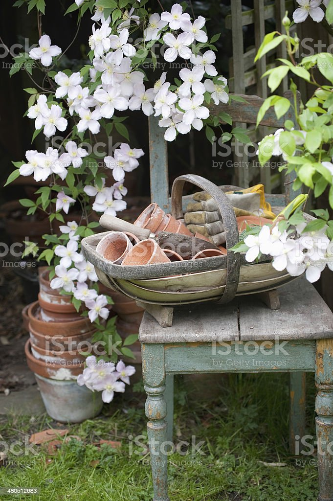 Flowering Clematis And Garden Tools stock photo