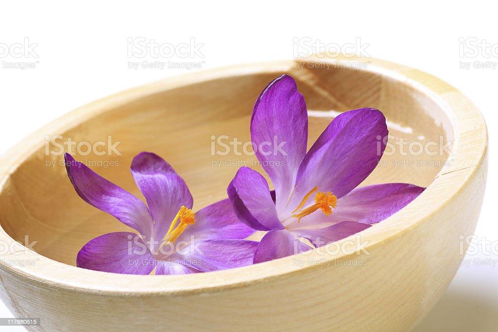 flowering crocuses royalty-free stock photo