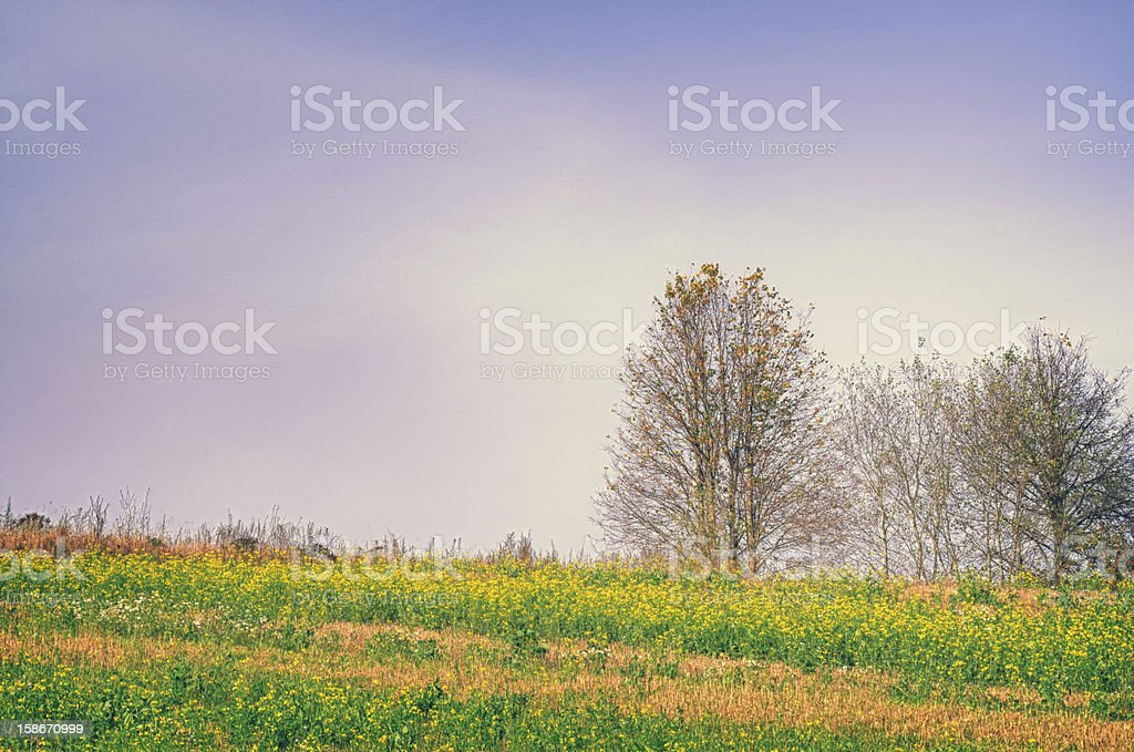 Flowering Field and Bare Trees in Autumn royalty-free stock photo
