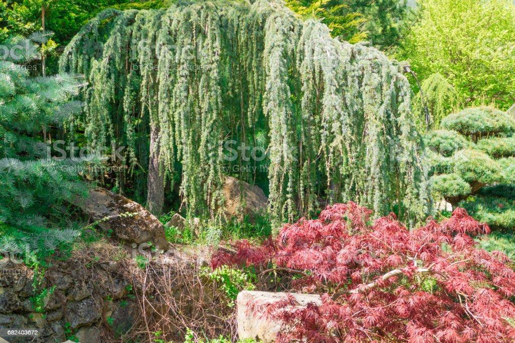Jardins fleuris de Yalta. Variété de couleurs de la nature en Europe photo libre de droits
