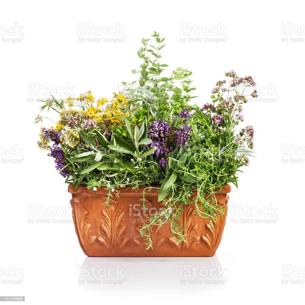 Flowering Herbs stock photo