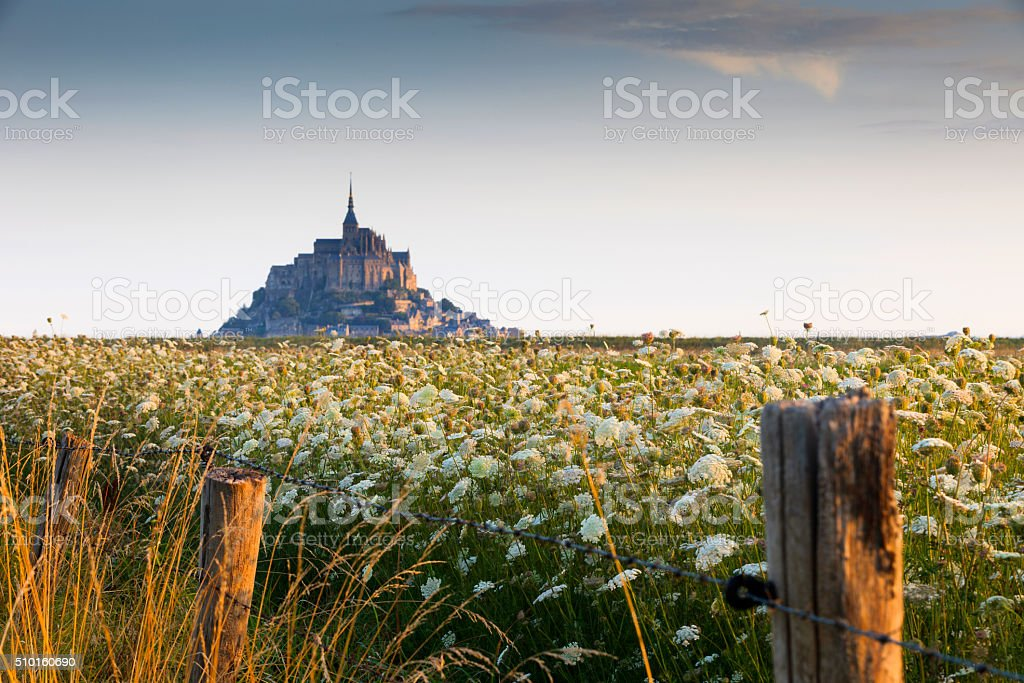 flowering meadow at Mont Saint-Michel stock photo