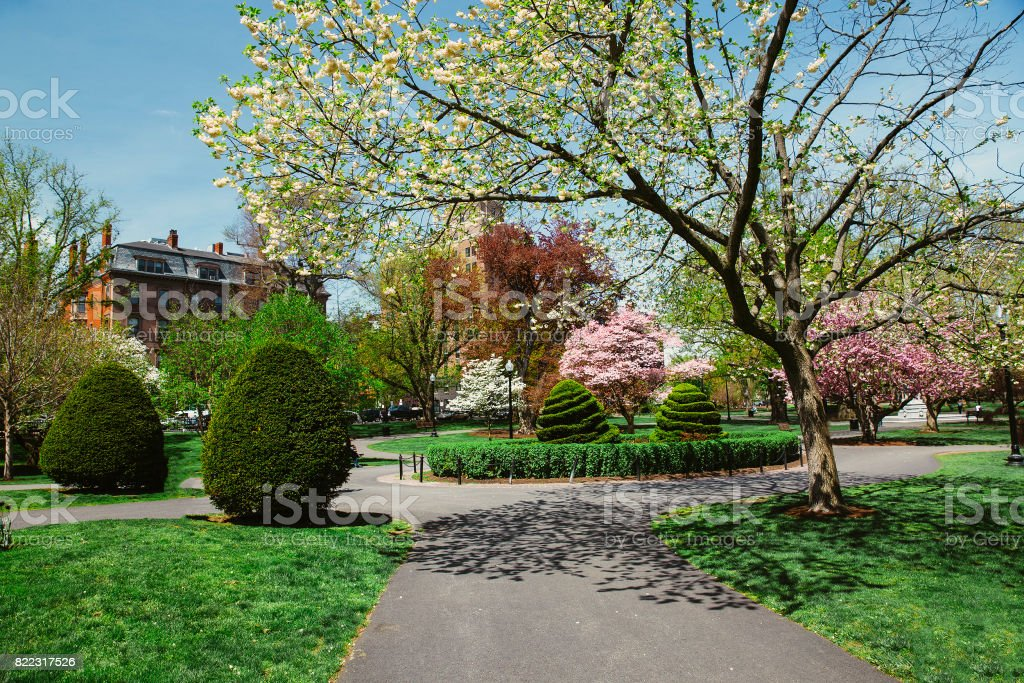 Flowering of trees in a spring park stock photo