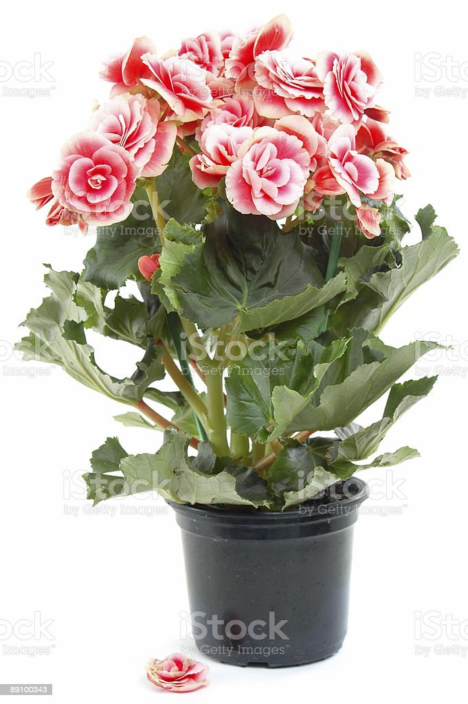 Plantas con flores foto de stock libre de derechos