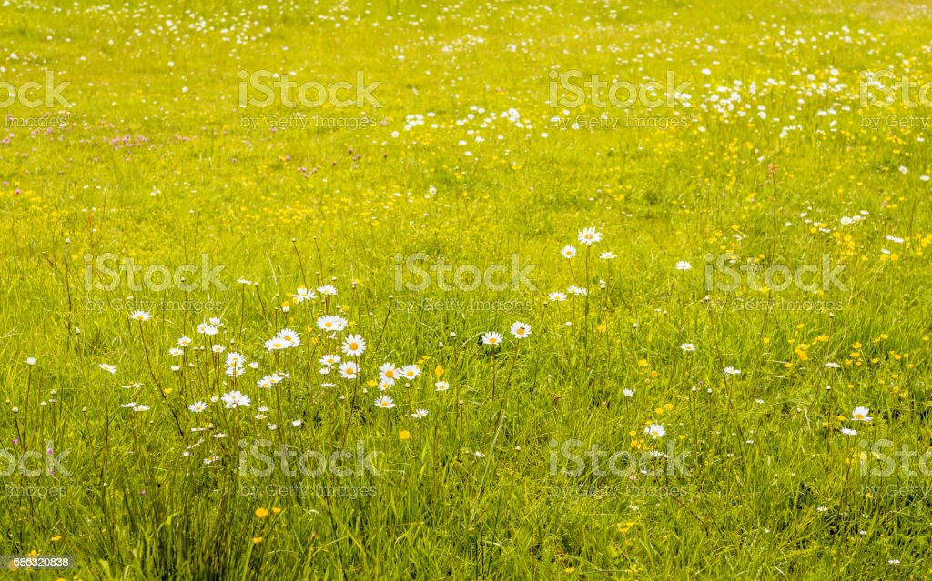 Flowering plants and grasses in the wild stock photo