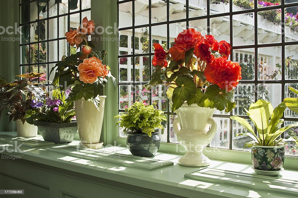 Flowering plants in the window at Butchart Gardens restaurant. royalty-free stock photo